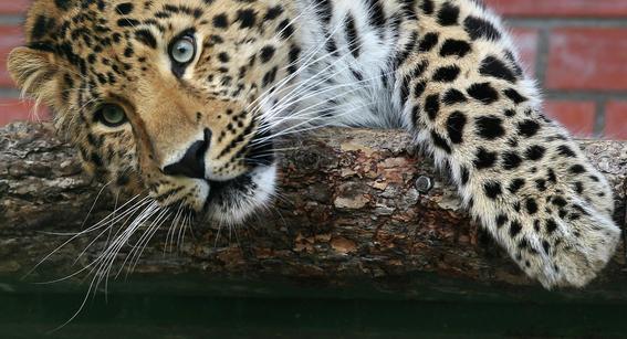 estos son los animales que siguen en la lista de extincion 2