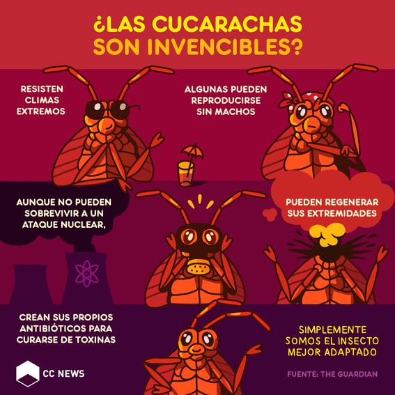 por que las cucarachas son invencibles 1