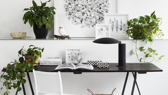 decoracion con plantas de interiores 1