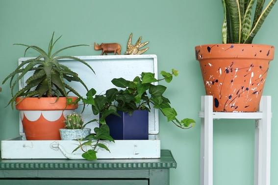 decoracion con plantas de interiores 2