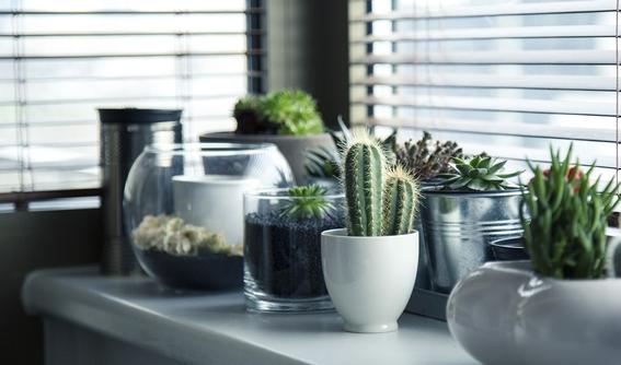 decoracion con plantas de interiores 3