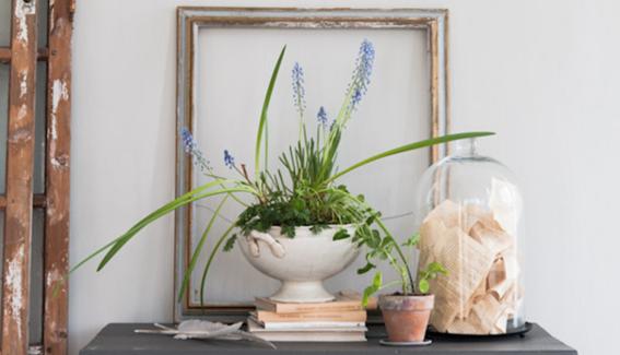 decoracion con plantas de interiores 4