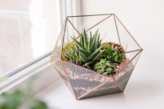 decoracion con plantas de interiores 6