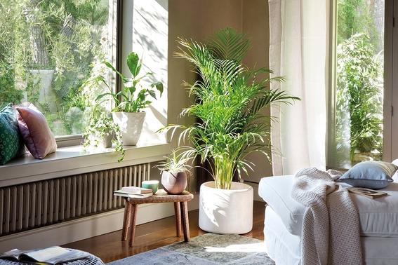 7 consejos de decoraci n con plantas para interiores y for Decoracion de espacios pequenos con plantas