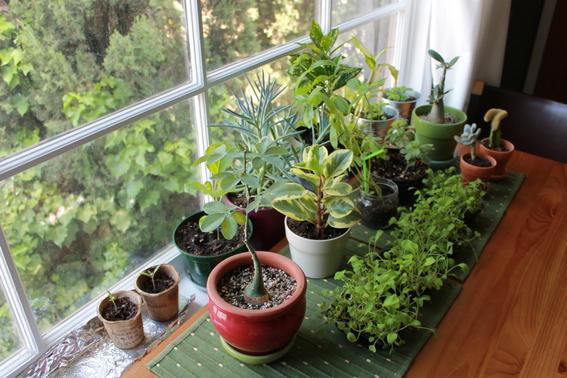 decoracion con plantas de interiores 10