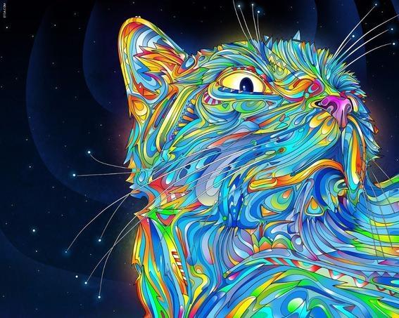 gato-psicodelico-high.jpg