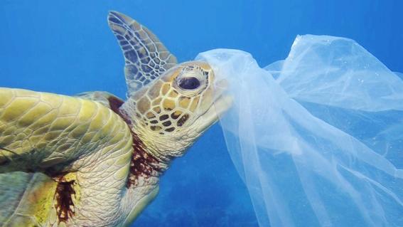 animales comen plastico 2