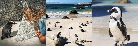 playas con animales 1