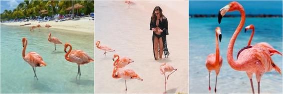 playas con animales 2