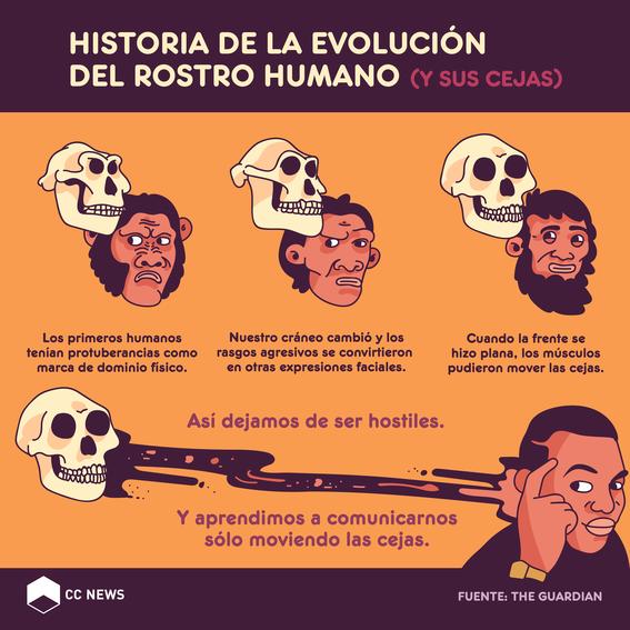 evolución del rostro humano 1