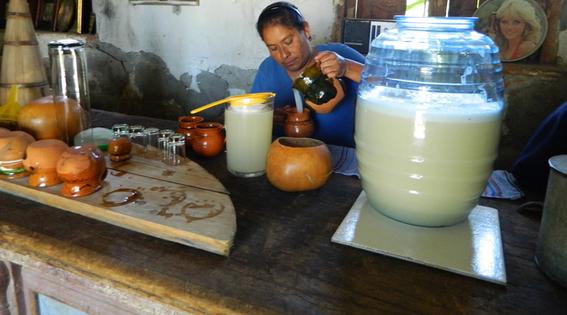 crean bebida de agave para prevenir males intestinales 1