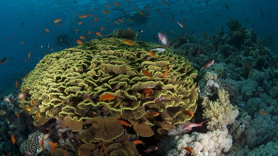 Conoce los arrecifes que están sobreviviendo al cambio climático 1