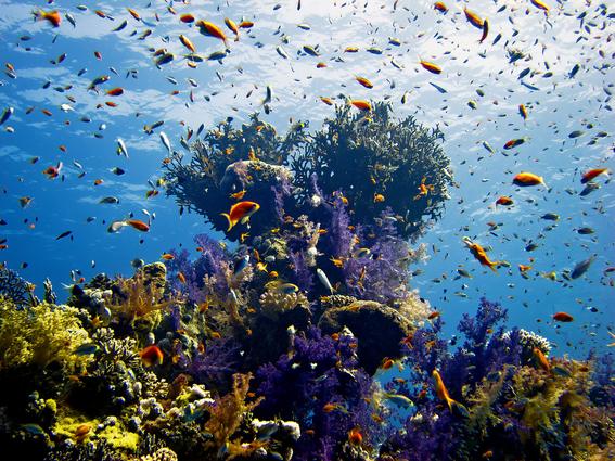 Conoce los arrecifes que están sobreviviendo al cambio climático 2