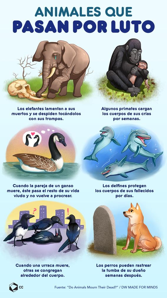 infografia animales por luto 1