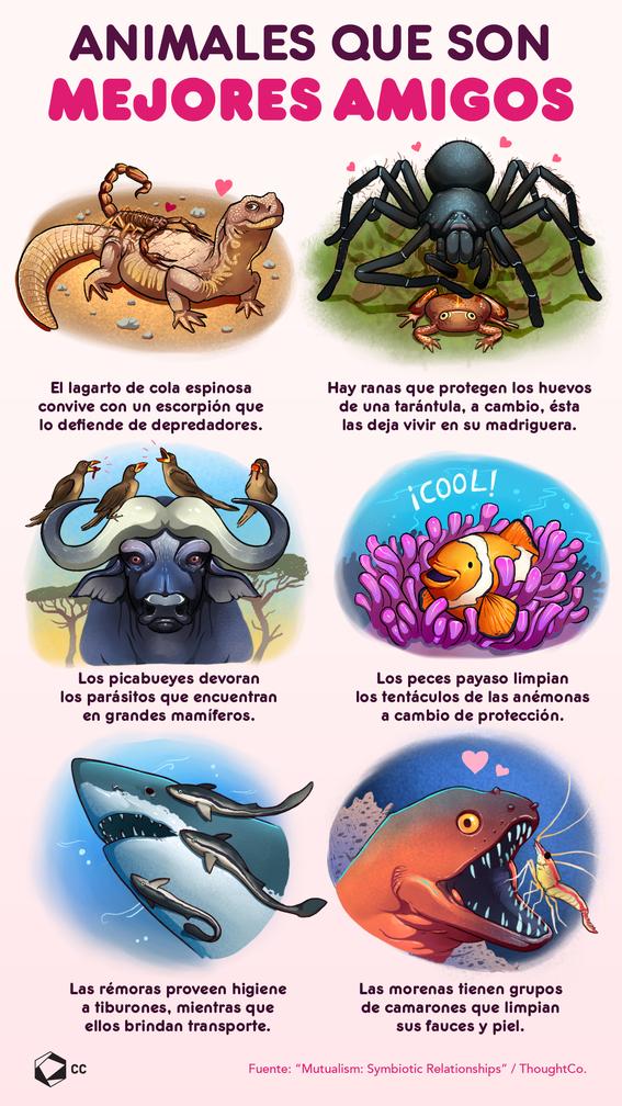infografia de animales con simbiosis 1