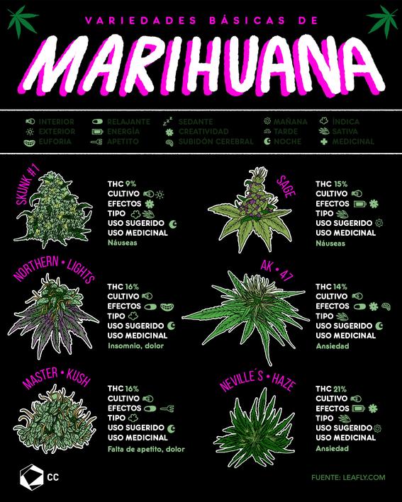 infografia tipos de marihuana 1