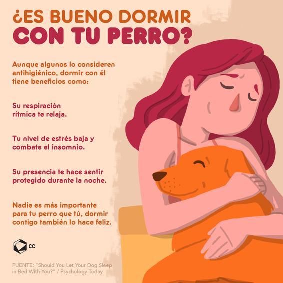 infografia es bueno dormir con mi perro 1