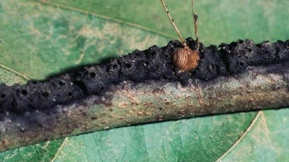 conoce a las hormigas sicarias que usan torturas de origen medieval 2