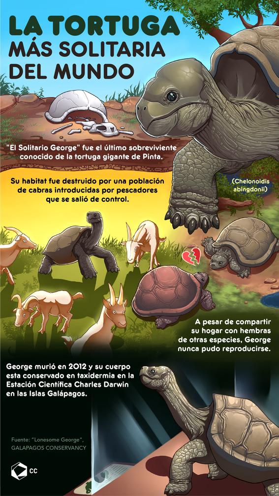 infografia de la tortuga george 1