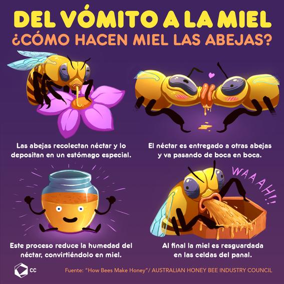Del vómito a la miel, ¿cómo hacen miel las abejas