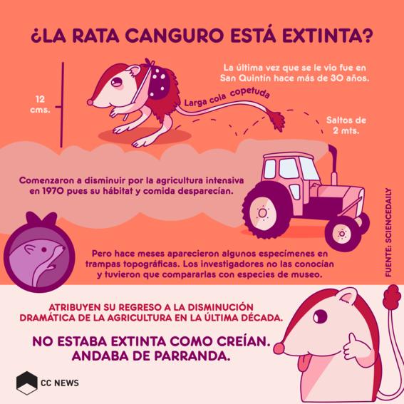 rata canguro extinta 1