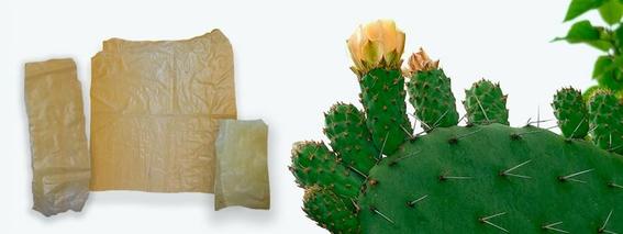 mexicana crea plastico con nopales 2