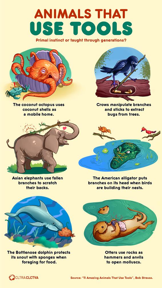 infographics of the animal kingdom 4