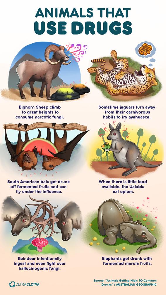 infographics of the animal kingdom 3