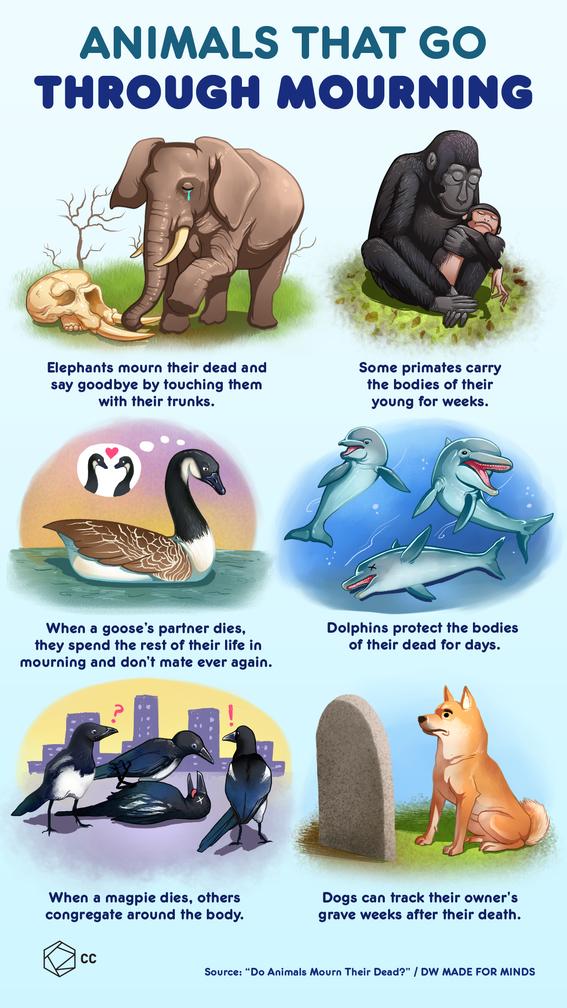 infographics of the animal kingdom 2