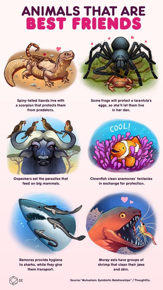 infographics of the animal kingdom 1