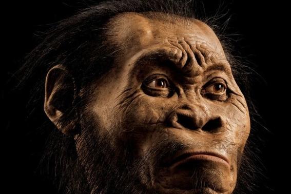 descubren como era el cerebro del ancestro mas antiguo 1
