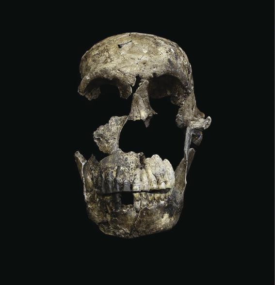 descubren como era el cerebro del ancestro mas antiguo 2