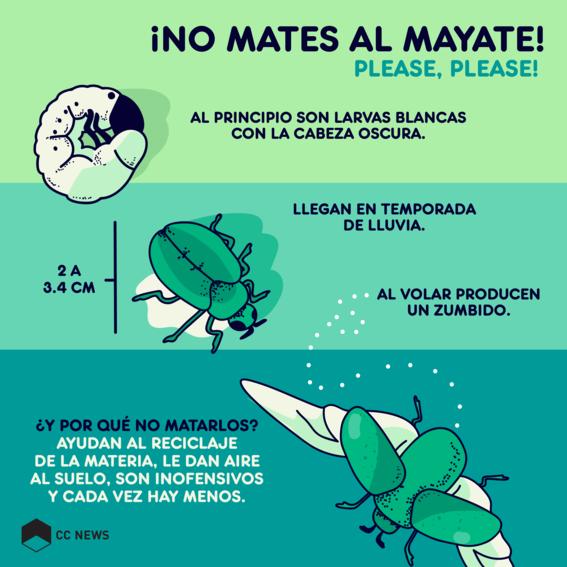 el mayate mexicano 1