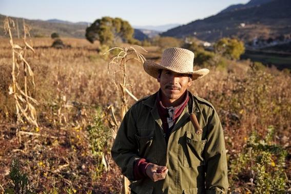 amlo propone precio de garantia a productos agricolas 1