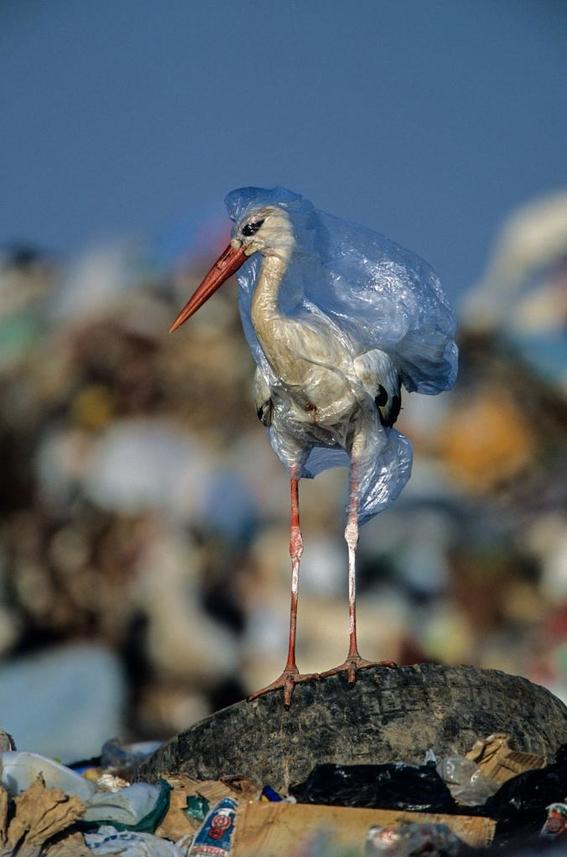 dejar de usar plastico 4