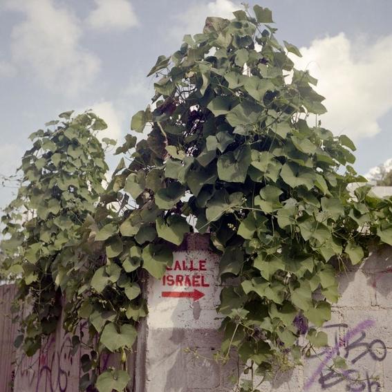 fotografias de giulia lacolutti 11