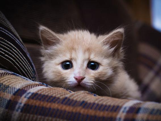 parasitos en mascotas 5