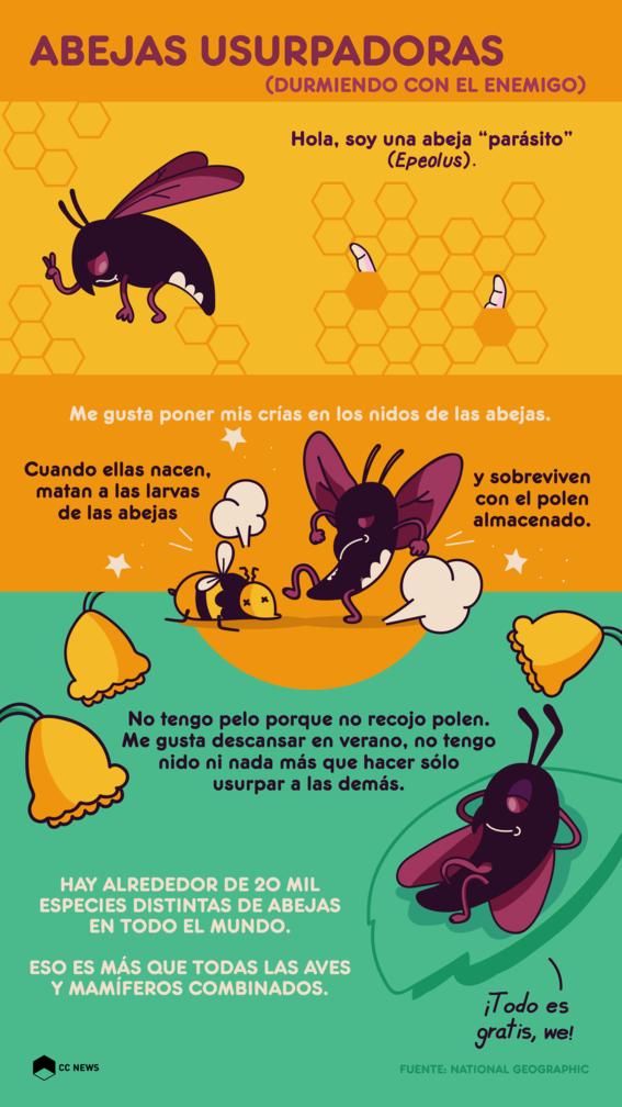 abejas usurpadoras epeolus 1