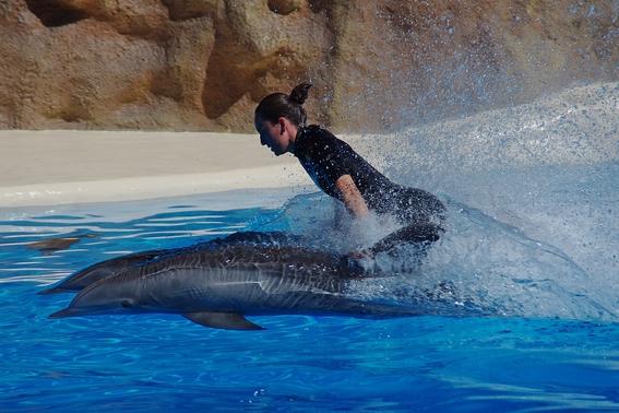 prohiben delfines en la cdmx 1