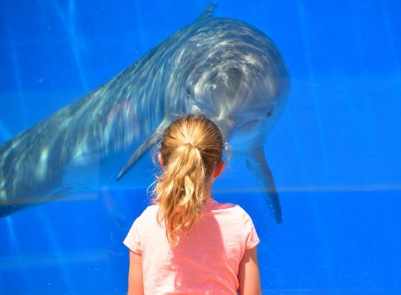 prohiben delfines en la cdmx 2
