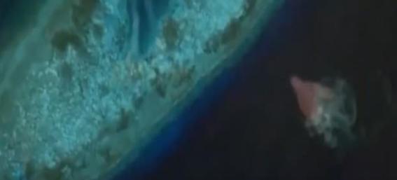 monstruos marinos captados en google maps 8