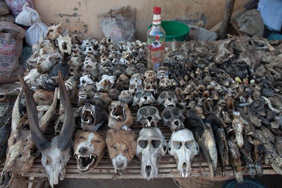 rituales vudu en africa fotos james hopkirk 7