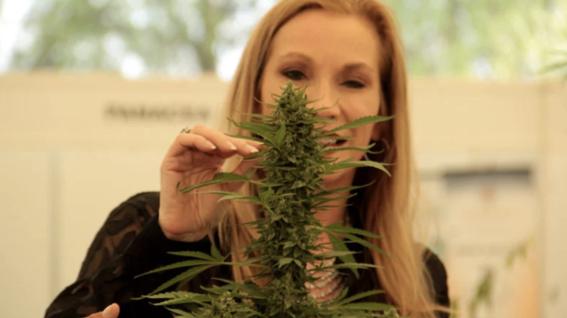 razones para legalizar la marihuana en mexico 1