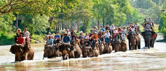elefantes de asia en peligro 1