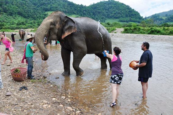 elefantes de asia en peligro 2