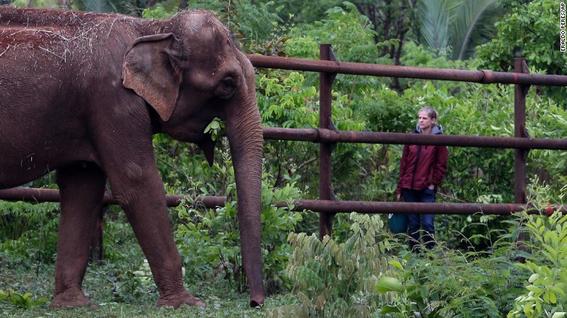 elefantes de asia en peligro 3