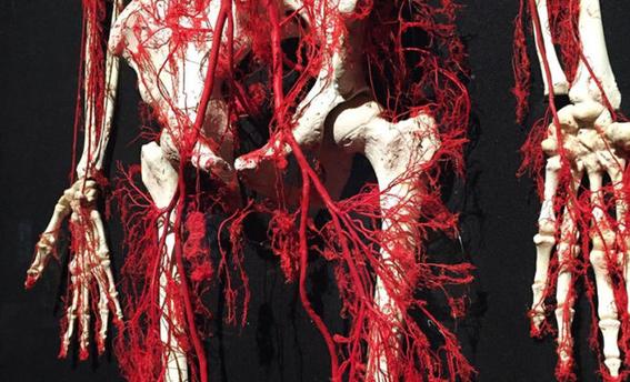 relacion entre el sistema circulatorio el papel de bano y la organizacion de las ciudades 1