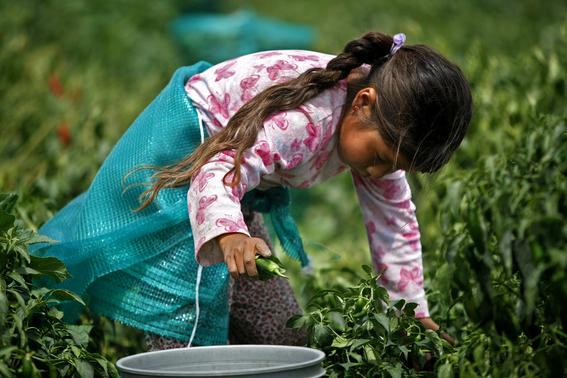 Ninos Trabajando En El Campo Mexico Www Imagenesmy Com