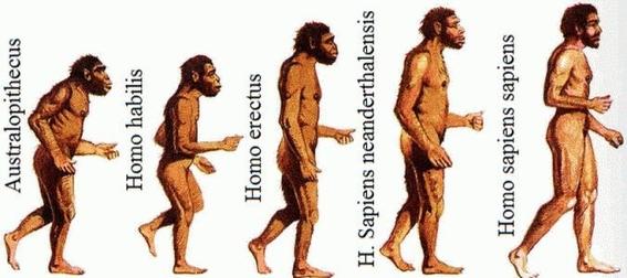 evolucion del cerebro humano 2