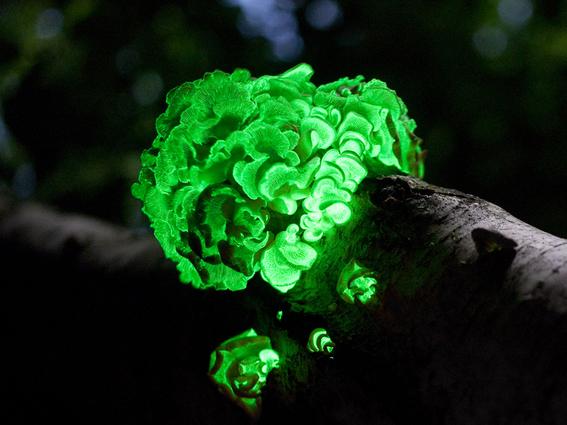 arboles bioluminiscentes el futuro del alumbrado publico 1